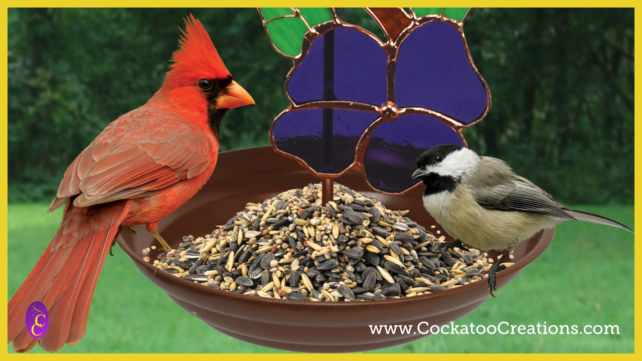 How to Choose the Best Bird Feeder for Your Yard