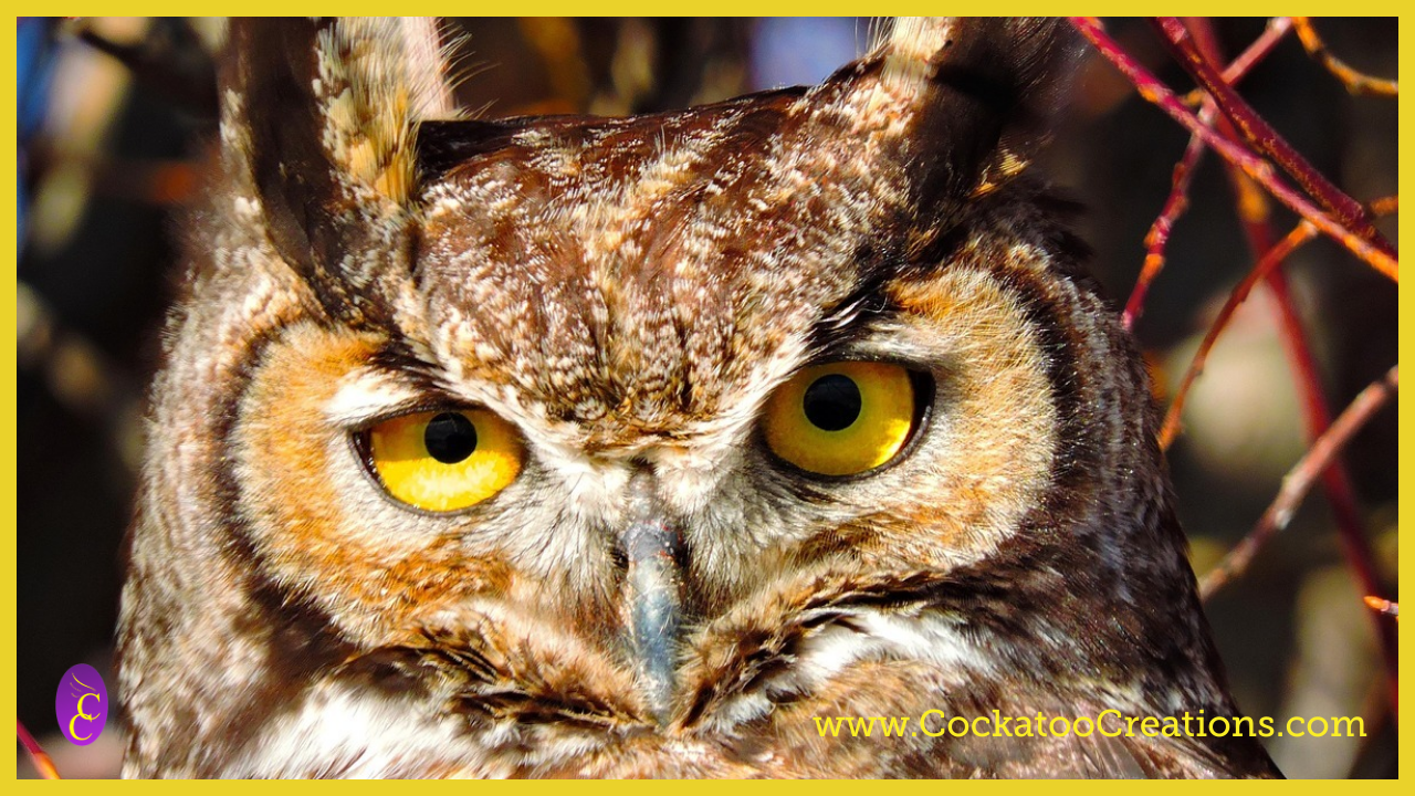 Great Horned Owl: Interesting Facts About This Amazing Bird