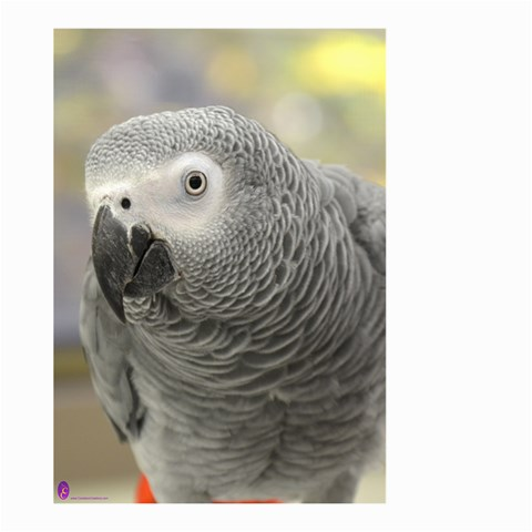 African Grey Parrot House Flag