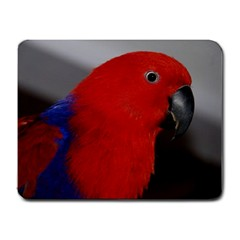 Eclectus Female Mouse Pad