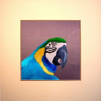 Blue and Gold Macaw Embroidered Silk Art
