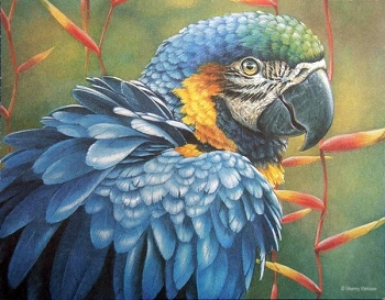 Blue and Gold Macaw Note Cards