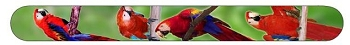 Red Macaws Nail File