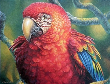 Scarlet Macaw Note Cards