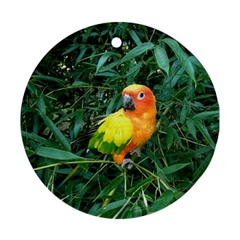 Sun Conure in the Woods Porcelain Ornament