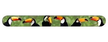 Toco Toucans Nail File