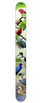 Tropical Birds Nail File