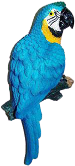 Blue and Gold Macaw Magnet