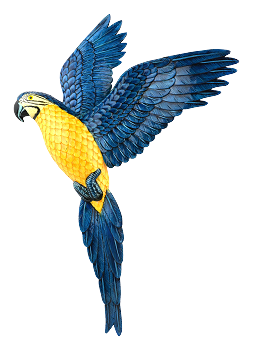 Flying Blue and Gold Macaw Wall Plaque