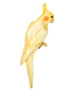 Lutino Cockatiel Pin