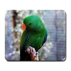 Eclectus Male Mouse Pad