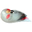 African Grey Parrot Wooden Bowl