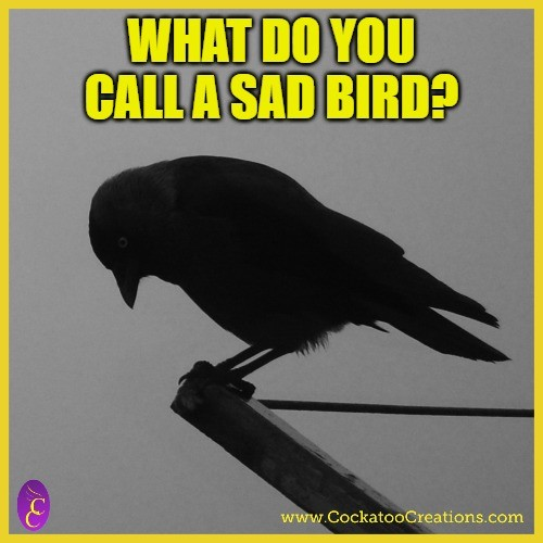 Sad Bird Riddle